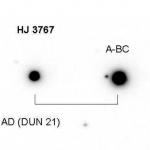 Measurement of some neglected southern multiple stars in Dorado and Pictor